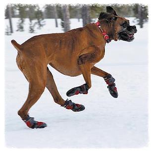 dog-boots